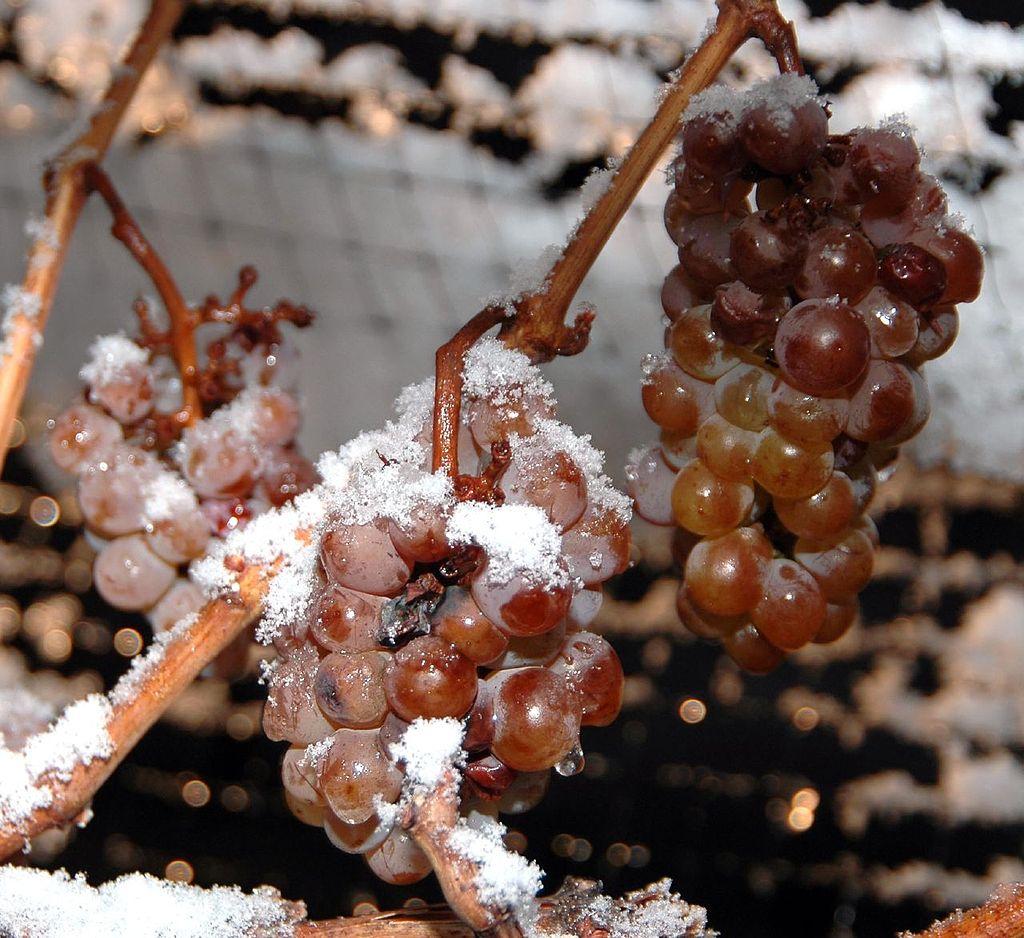 Μέθοδος παγώματος σταφυλιού για παγωμένο λευκό κρασί