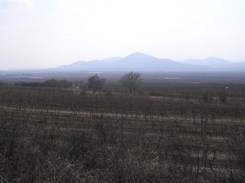 Αμπελώνες Takay στην Σλοβακία
